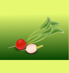 Whole radishes with leaves half and flower vector