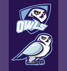 mascot of white owl with sport style vector image vector image