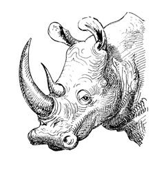 Artwork rhinoceros sketch black and white drawing vector