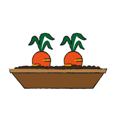 carrots growing in pot icon image vector image