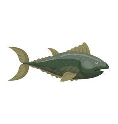 fish redfin nature animal seafood vector image