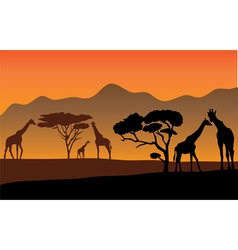 Giraffes vector