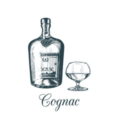 hand sketched cognac bottle and glass vector image