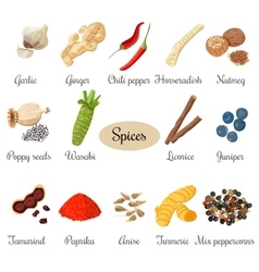 Icon big set of popular culinary spices vector image