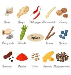 Icon big set popular culinary spices vector