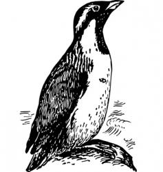 penguin synthliboramphus vector image