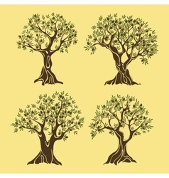 Set of greek olive oil trees in vintage style vector image