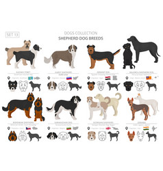 Shepherd and herding dogs collection isolated on vector