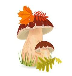 Edible mushroom porcini for you design vector image