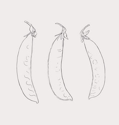 hand drawn sketch peas sketch set organic food vector image