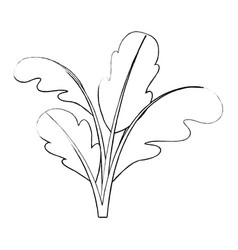 Monochrome blurred silhouette of beet plant vector