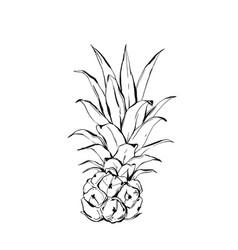 Pineapplefruit hand drawn sketch on beige vector