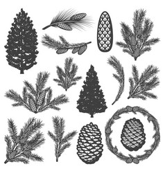 Vintage coniferous tree elements set vector