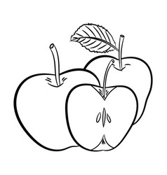 line drawing of apples -simple line vector image