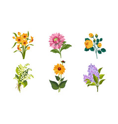 beautiful flowers set daffodil lily the vector image