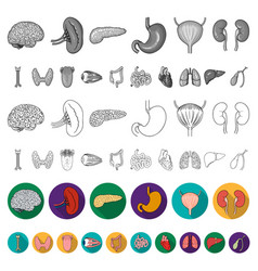 Human organs flat icons in set collection for vector