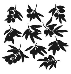 olive branches and leaves silhouette vector image
