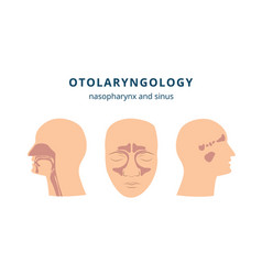 Otolaryngology - ear nose and throat health icon vector