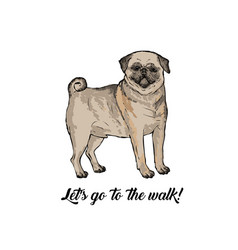 pug dog sketch hand drawn vector image