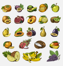 set of hand drawn engraved fresh fruits vector image