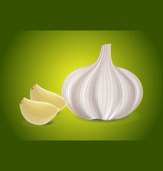 fresh whole garlic two cloves slices and garlic vector image vector image