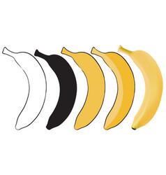 banana set from outline sketch to 3d vector image