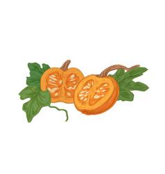 cut halves ripe fall pumpkin with orange flesh vector image