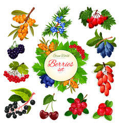 Icons set of berries and wildberry fruits vector