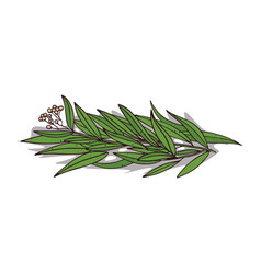 Isolated clipart eucalyptus vector