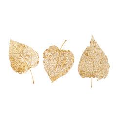 Set of golden leaves skeletons fallen foliage for vector