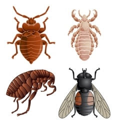 Set of icons with pests vector image