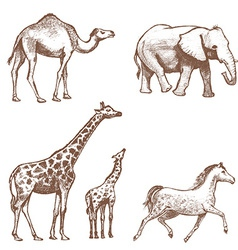 collection of picture pencil with animals vector image vector image