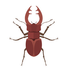 Insect stag beetle icon flat isolated vector
