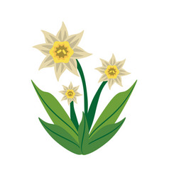 daffodil flower spring image vector image vector image