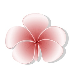 A light colored flower vector image