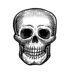 human skull sketch hand-drawn skeleton zombie vector image