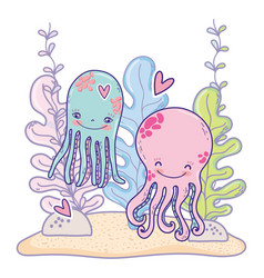 octopus couple animals with heart and seaweed vector image