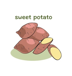 Sweet potatoes isolated vector image