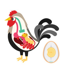 chicken egg life cycle vector image