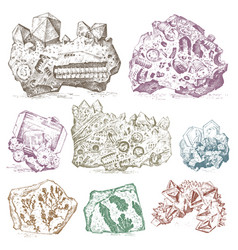 fossilized plants stones and minerals crystals vector image
