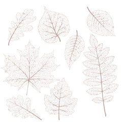 Dried leaves set EPS 10 vector image