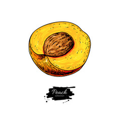 peach slice drawing isolated hand drawn vector image vector image