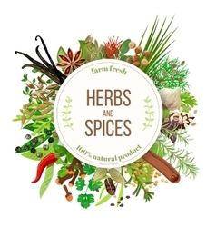 Culinary herbs and spices big set vector image vector image