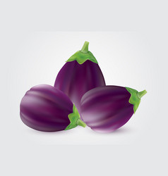 eggplant or aubergine vegetable isolated on white vector image