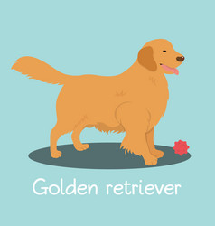 An depicting golden retriever dog cartoon vector