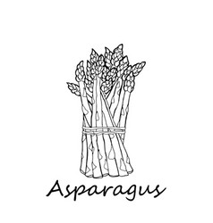 asparagus on a white background vector image