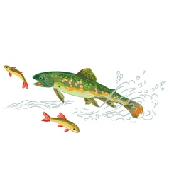 Brook-trout-predator-catch vector