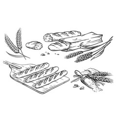 collection of natural elements of bread and flour vector image