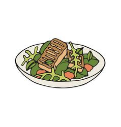 Grilled halloumi salad vector