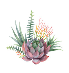 watercolor bouquet of cacti and succulent vector image